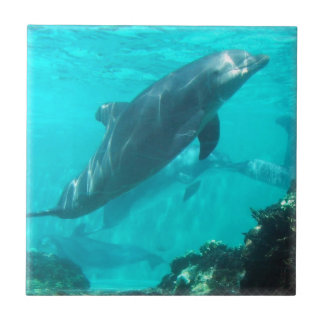 Swimming Dolphin Tile