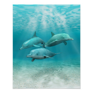 Swimming Dolphins Poster