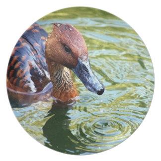 Swimming Duck Dinner Plate