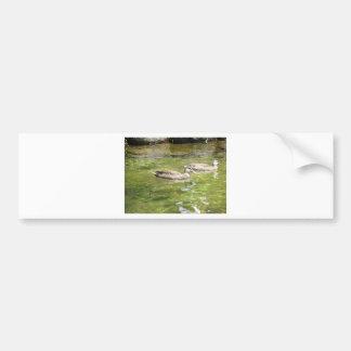 Swimming Ducks Car Bumper Sticker