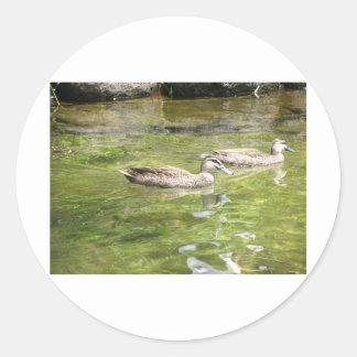Swimming Ducks Round Sticker