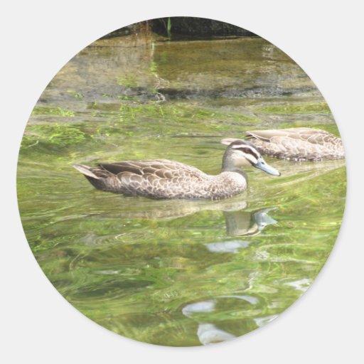 Swimming Ducks Round Stickers