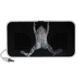 Swimming frog speaker system