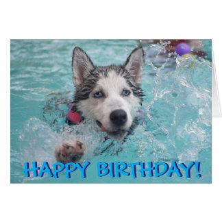 Swimming husky photo birthday card
