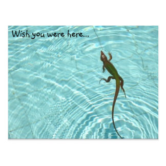 Swimming Lizard postcard