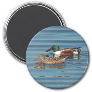 Swimming Northern Shovelers Magnet