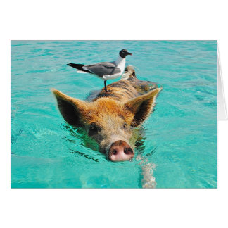 Swimming Pig Basic Blank Card