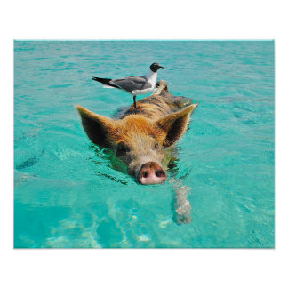 Swimming Pig with a Passenger Poster