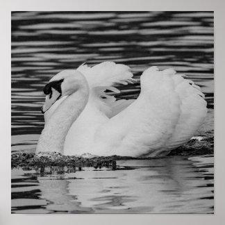 Swimming Swan Poster