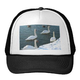 Swimming swans cap