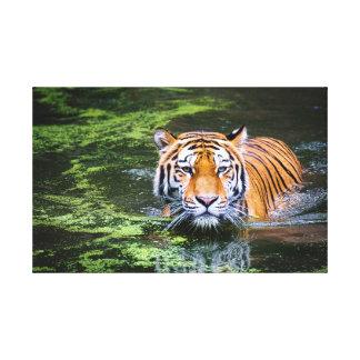 Swimming tiger canvas