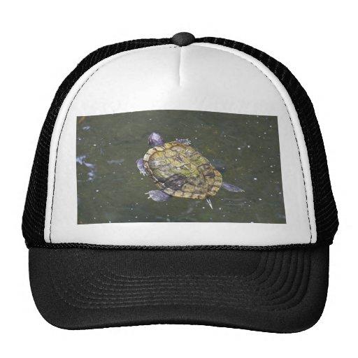 Swimming turtle in Singapore Botanical Garden Mesh Hats