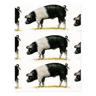 swine in a row postcard