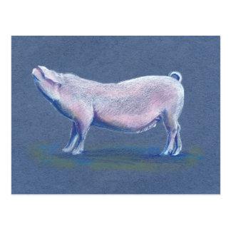 Swine pig hog hand drawn art postcard