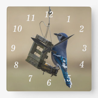 Swinging Blue Jay Square Wall Clock