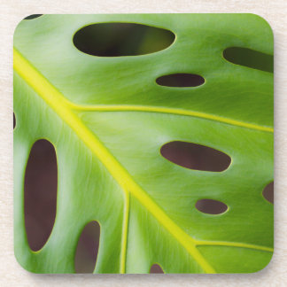 Swiss Cheese Plant Plastic Coasters (set of 6)