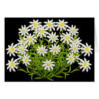 Swiss Edelweiss Flowers Card