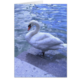 Swiss Swan Card