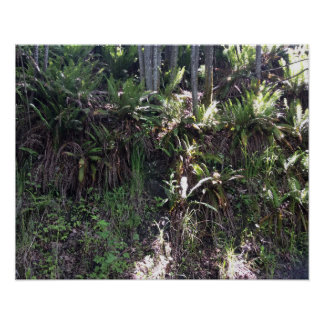Sword Ferns On A Hillside With Trees Poster