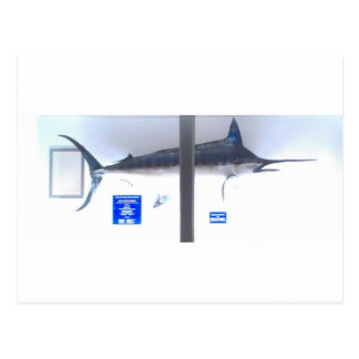 swordfish obx postcard
