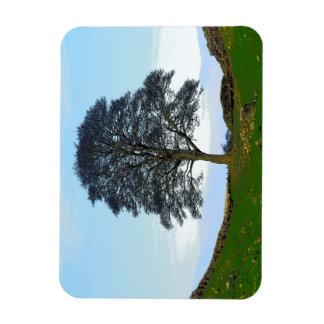 Sycamore Gap Flexible Photo Magnet