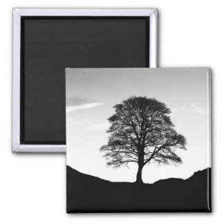 Sycamore Gap Magnet