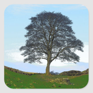 Sycamore Gap Stickers