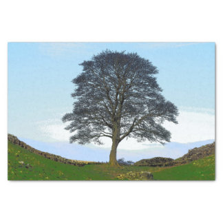 Sycamore Gap Tissue Paper