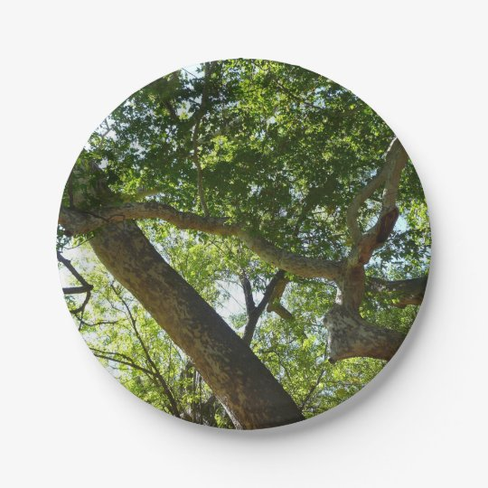 Sycamore Tree Green Nature Photography 7 Inch Paper Plate