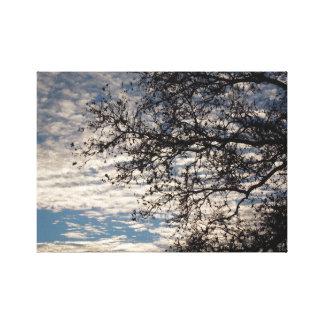 Sycamore Tree in Cloudy Sky near Sundown in Winter Canvas Print