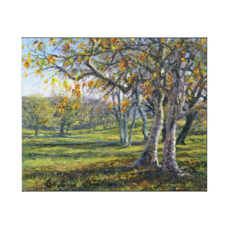 """""""Sycamores in the Fall"""" on Gallery Wrapped Canvas Print"""