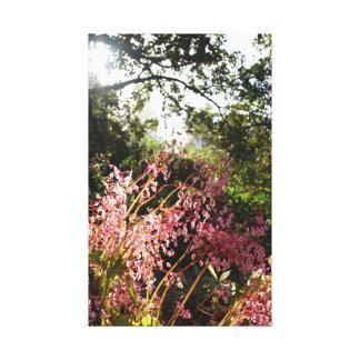 Sydney Botanic Gardens Canvas Print