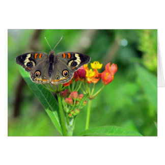 Sympathy Card (Common Buckeye 2470)