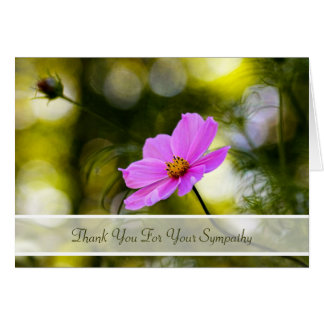 Sympathy Thank You Evening Pink Cosmos Wildflower Greeting Card