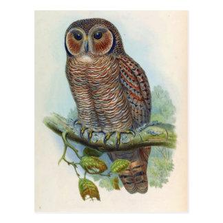 Syrnium Ocellatum (Mottled Wood Owl) Postcard