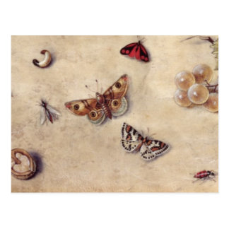 T31566 A Study of Various Insects, Fruit and Anima Postcard