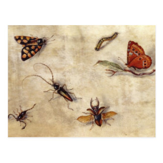 T31567 A Study of Various Insects, Fruit and Anima Postcard