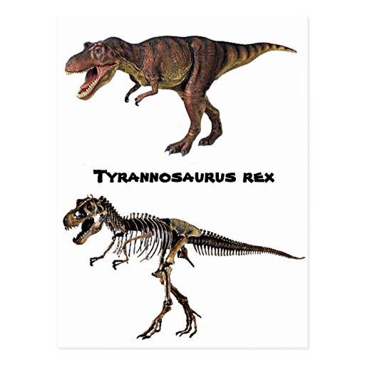 T-rex Flesh-n-Bone,Postcard