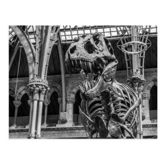 """T-Rex Skeleton"" postcards"