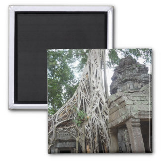 ta prohm roots refrigerator magnets