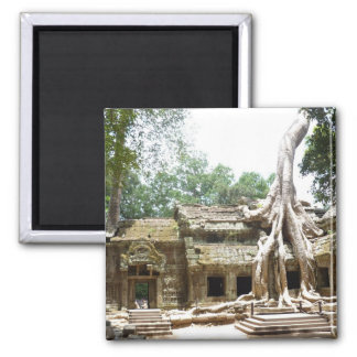 ta prohm tree square magnet