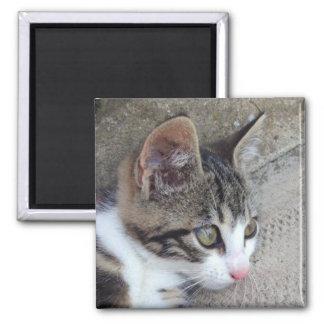 Tabby and White Kitten Magnet