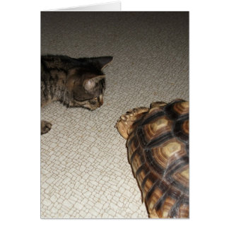 Tabby Cat and Sulcata Tortoise Card