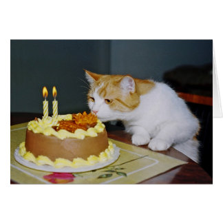 Tabby Cat Birthday Greeting Card