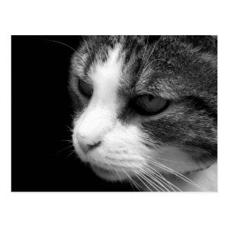 Tabby Cat Black & White Portrait - Animal Postcard