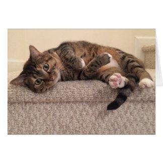 Tabby Cat, card