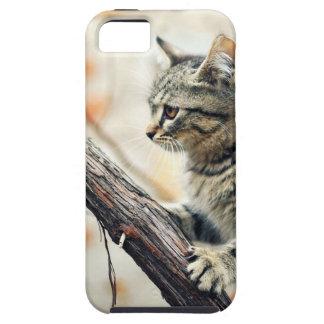 Tabby Cat Climbs Autumn Tree iPhone 5 Case