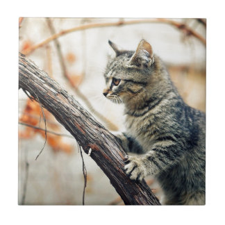 Tabby Cat Climbs Autumn Tree Small Square Tile