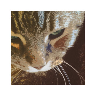 Tabby Cat Close Up Wrapped Canvas