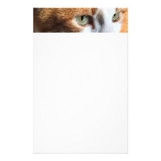 Tabby cat closeup stationery